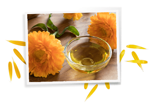Ingrédients Calendula Herbal Extract-Toner
